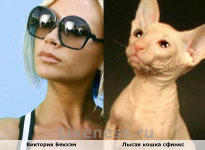 Виктория Бекхэм похожа на Лысую кошку сфинкс