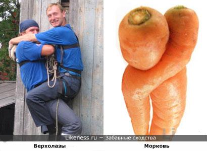 Верхолазы похожи на морковь