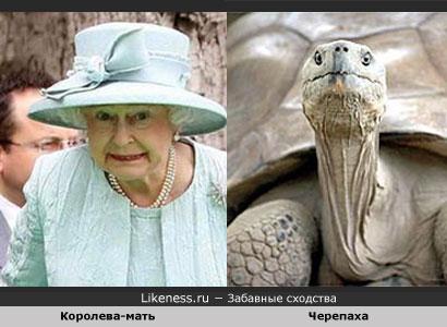 Королева Елизавета похожа на Черепаху