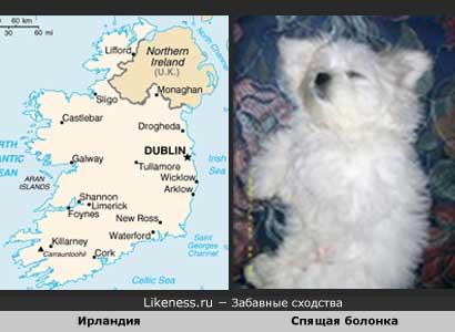 Карта Ирландии похожа на спящего щенка