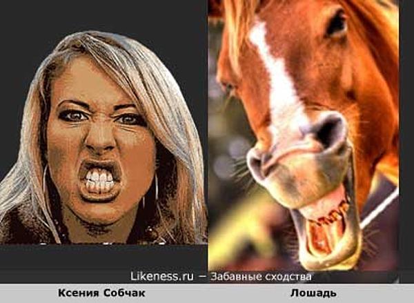 Ксения Собчак похожа на лошадь