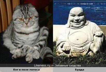 Кот в позе лотоса похож на Будду