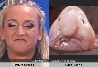 Ольга Бузова похожа на Рыбу-каплю
