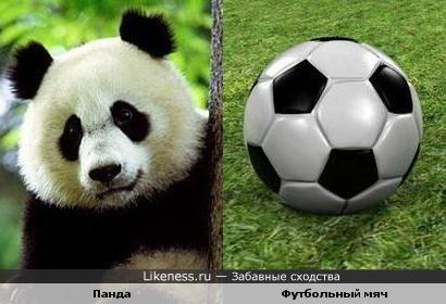 Панда похожа на футбольный мяч