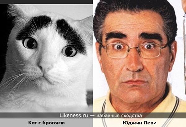 Кот с бровями похож на Юджина Леви