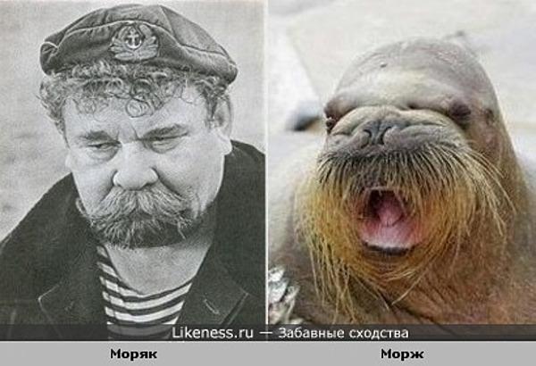 Морж и моряк похожи
