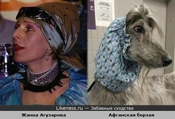 Жанна Агузарова похожа на афганскую борзую