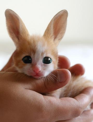 Забавное сходство: детеныш фенека похож одновременно на кошку и кролика