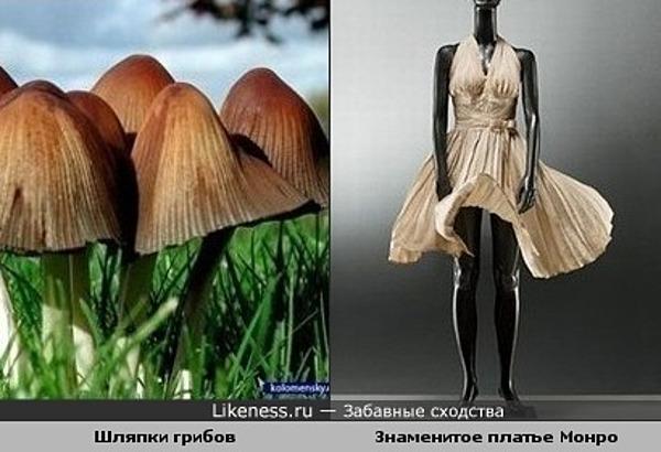 Шляпки грибов похожи на знаменитое платье Мерилин Монро