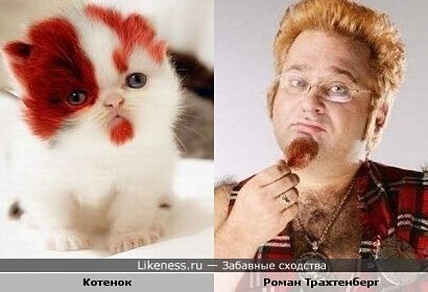 Котенок похож на Романа Трахтенберга