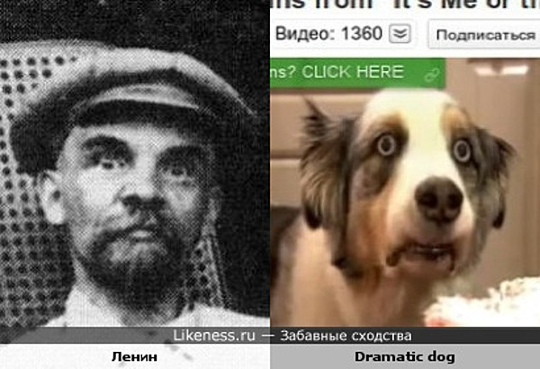 Ленин похож на собаку с драматическим взглядом с YouTube