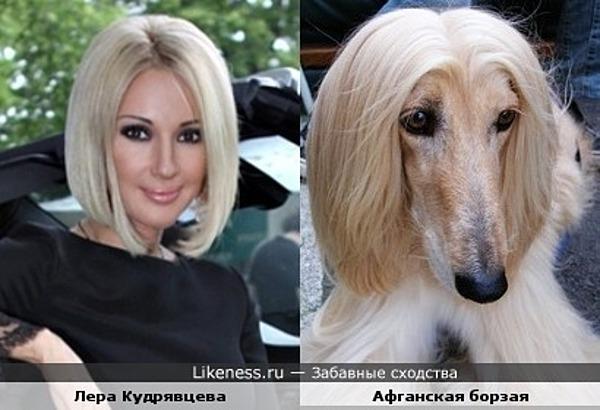 Лера Кудрявцева похожа на афганскую борзую