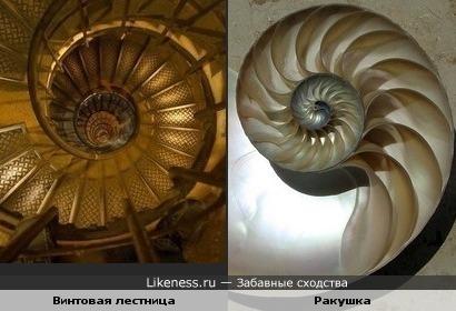 Винтовая лестница похожа на ракушку