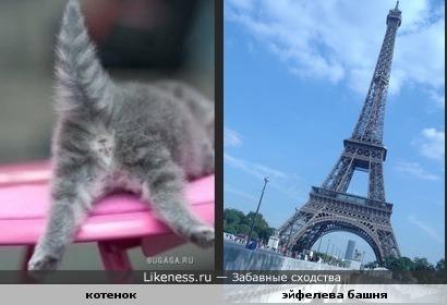 Котенок (вид сзади) похож на Эйфелеву башню