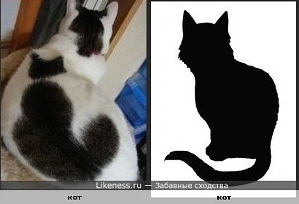 Пятна на спине кота похожи на... кота!