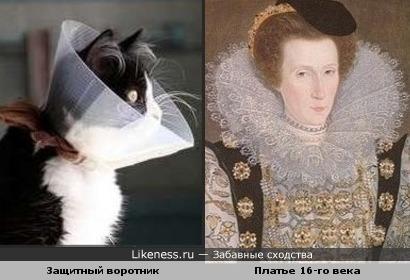 Защитный воротник у кошки похож на воротник средневекового платья