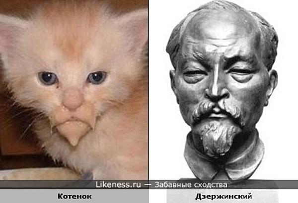 Котёнок похож на Феликса Дзержинского