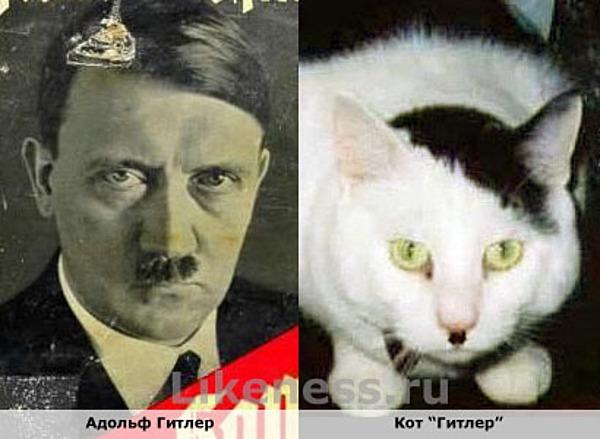 Кот похож на Гитлера