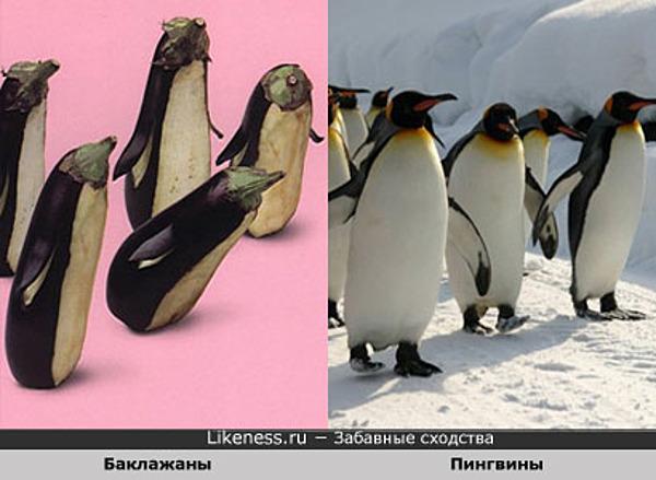 Смешные овощи: Баклажаны похожи на Пингвинов