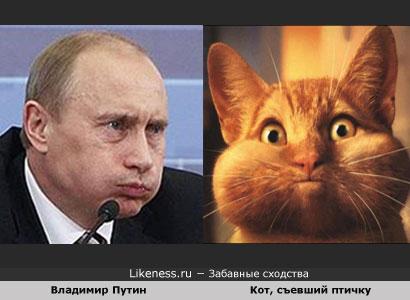 Владимир Путин похож на Кота, съевшего птичку