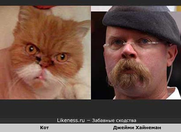 Кот похож на Джейми Хайнемана