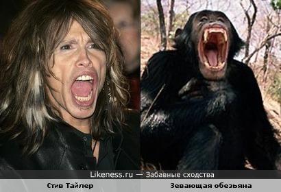 Стив Тайлер похож на зевающую обезьяну