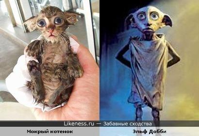 """Мокрый котенок похож на Эльфа Добби из """"Гарри Поттера"""""""