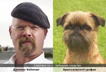 Джимми Хейнеман похож на собаку породы Брюссельский грифон