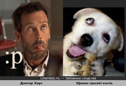 Доктор Хаус похож на щенка, грызущего кость