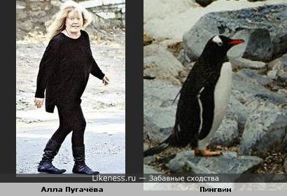 Алла Пугачёва похожа на пингвина