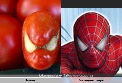 Томат похож на человека-паука