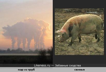 пар из труб похож на свинью