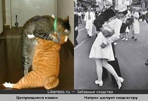 Целующиеся кошки похожи на знаменитую фотографию поцелуя матроса вернувшегося с войны и медсестры