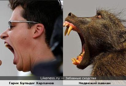 Гарик Харламов похож на медвежьего павиана
