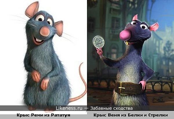 Крыс Веня из Белки и Стрелки сильно смахивает на крыса Реми из Рататуя