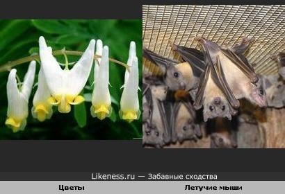 Цветы висят как летучие мыши