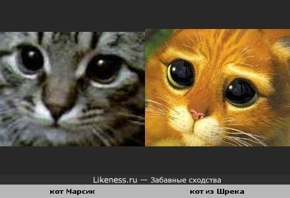кот Марсик похож на очень известного кота