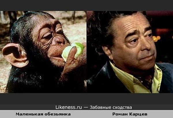 Маленькая обезьянка похожа на Романа Карцева