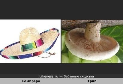 Срезанный гриб напоминает сомбреро