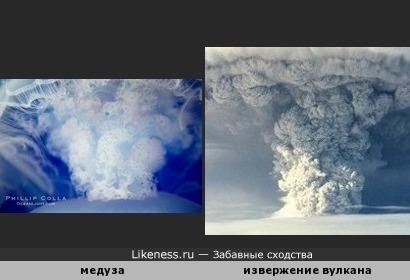 Медуза напоминает извержение вулкана