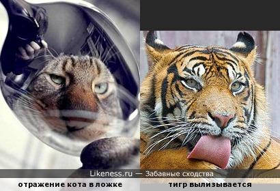 Каждый кот в душе тигр и наоборот
