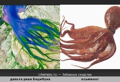 Дельта реки Бецибука напоминает осьминога