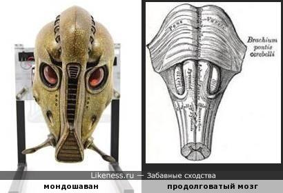 Голова мондошавана напоминает продолговатый мозг