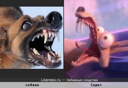 Собака напоминает саблезубую белку Скрата