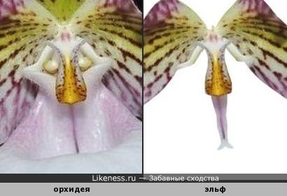 На картинке с орхидеей затаился эльф