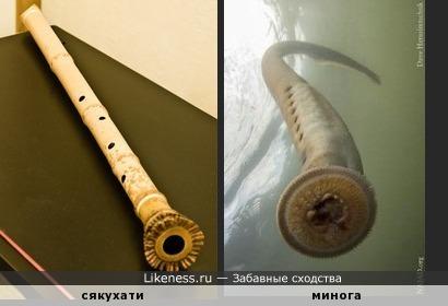 """Японская бамбуковая флейта """"сякухати"""
