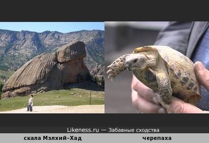Скала Мэлхий-Хад в Монголии напоминает черепаху