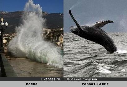 Волна напоминает горбатого кита