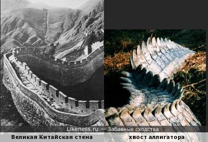 Великая Китайская стена напоминает хвост аллигатора