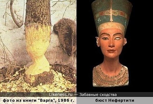 Работа бобра напоминает бюст египетской царицы Нефертити